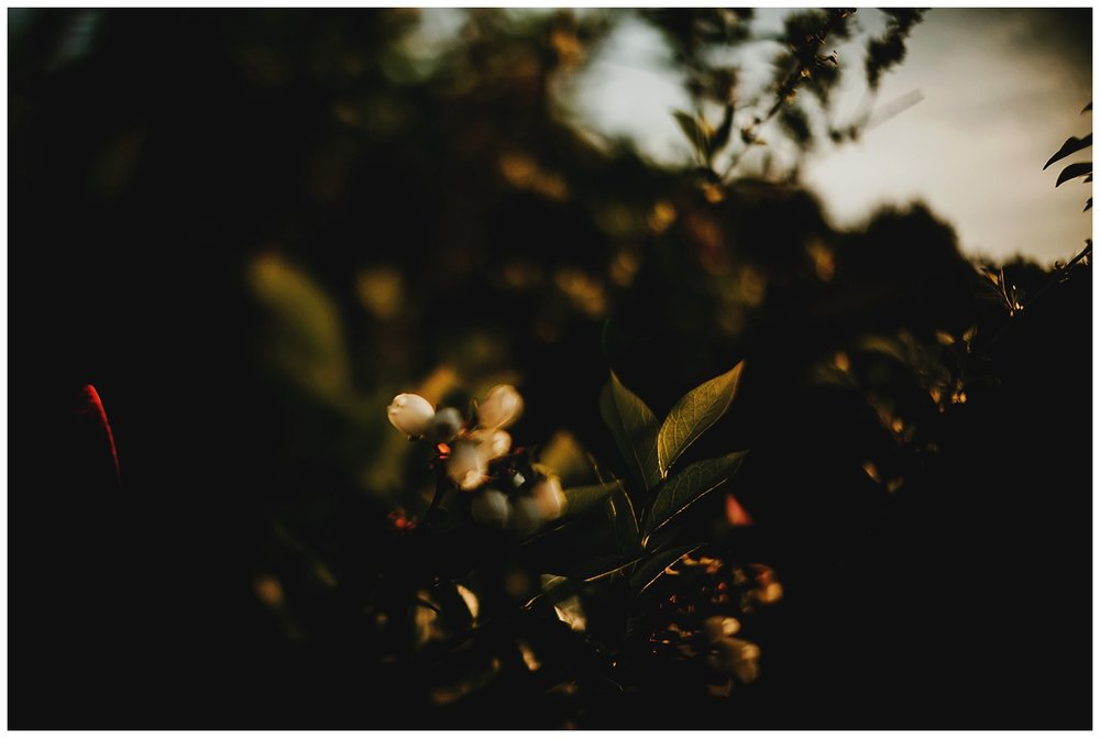 freelensed_8.jpg
