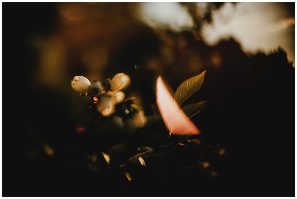 freelensed_6.jpg