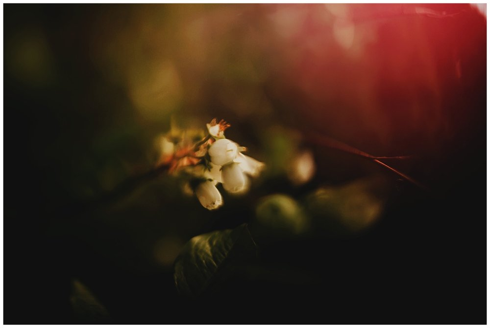 freelensed_2.jpg