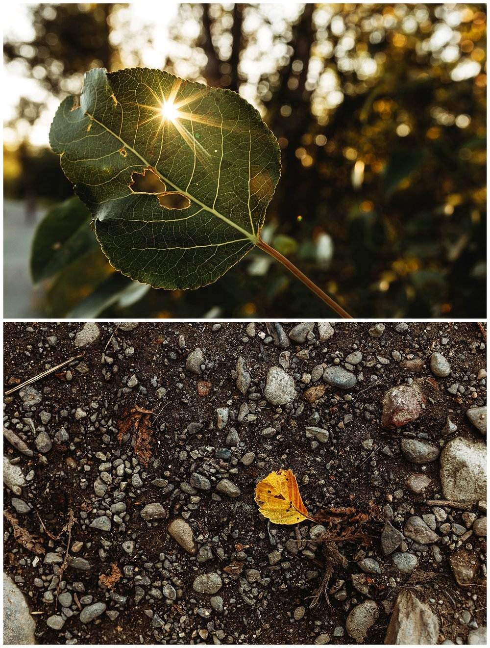 Sun Burst Nature.jpg