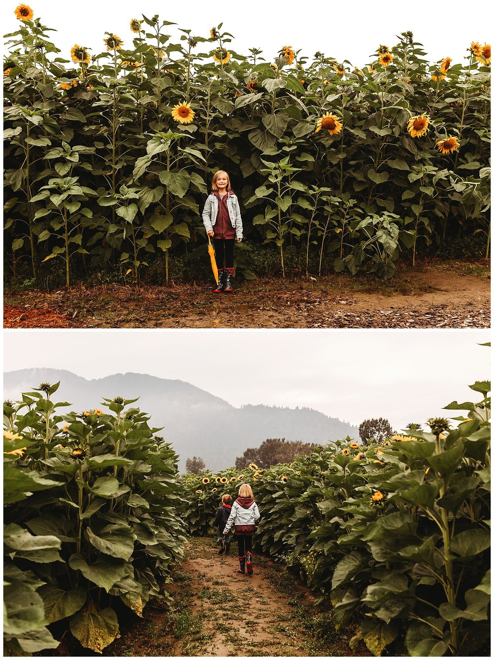 Chilliwack Sunflower_1.jpg