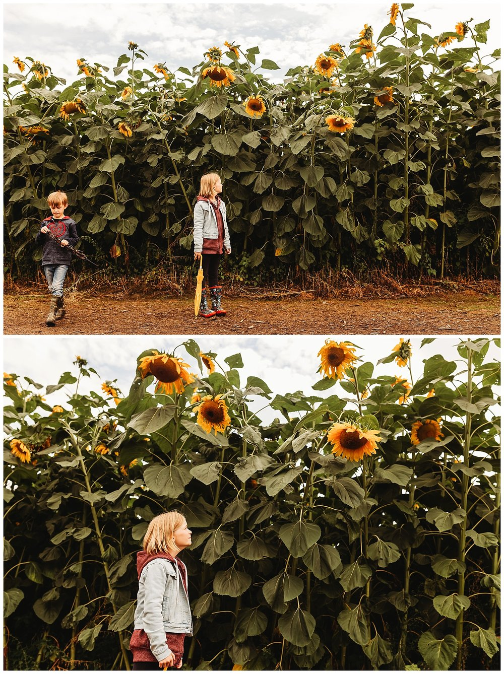 Chilliwack Sunflower_17.jpg
