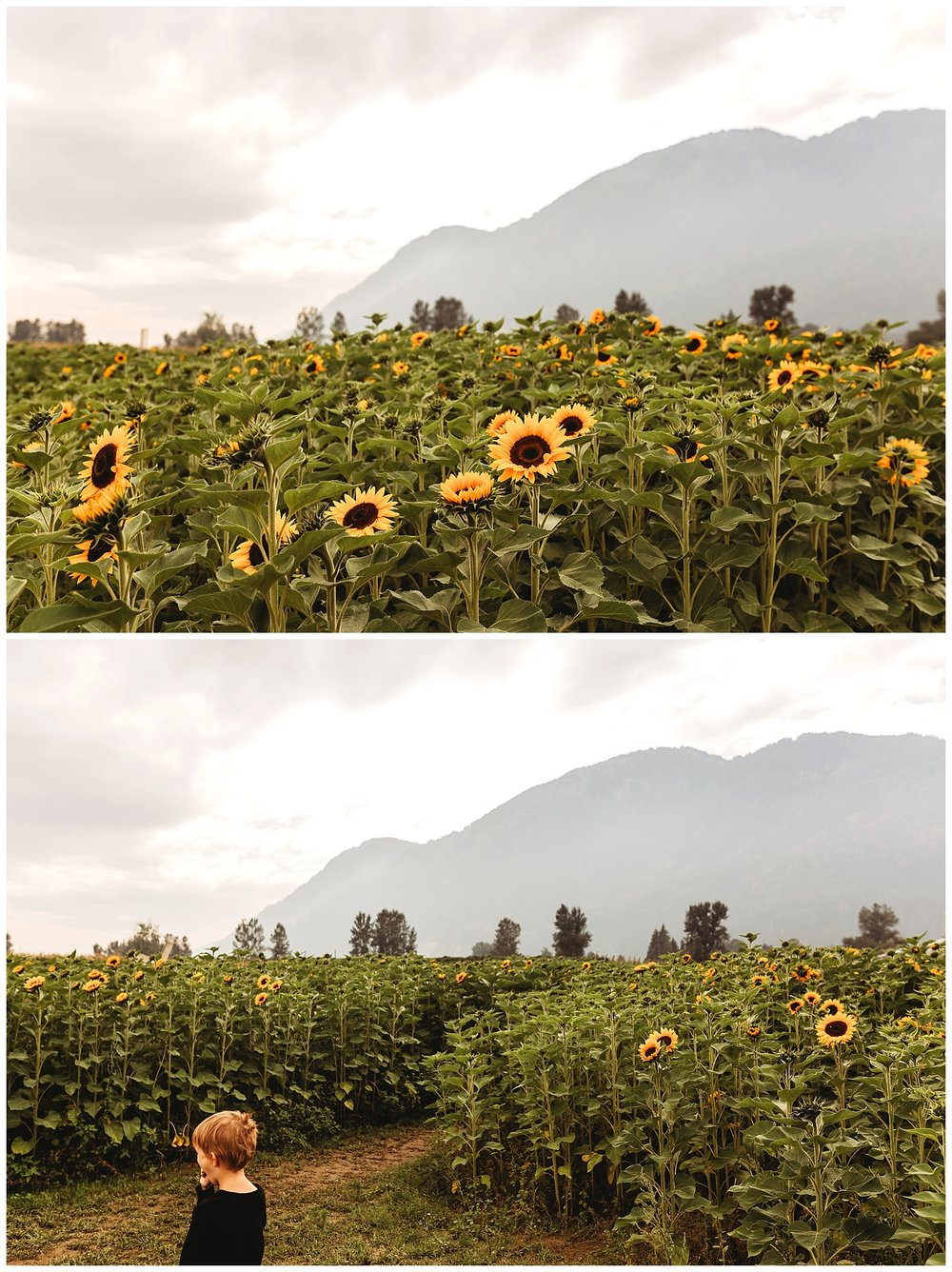 Chilliwack Sunflower_23.jpg