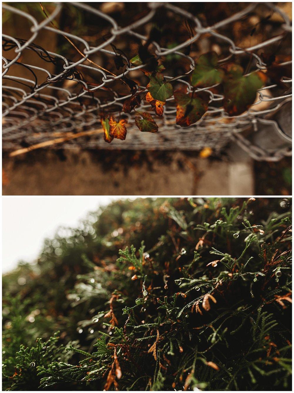 Fall Leaves Chilliwack_2.jpg