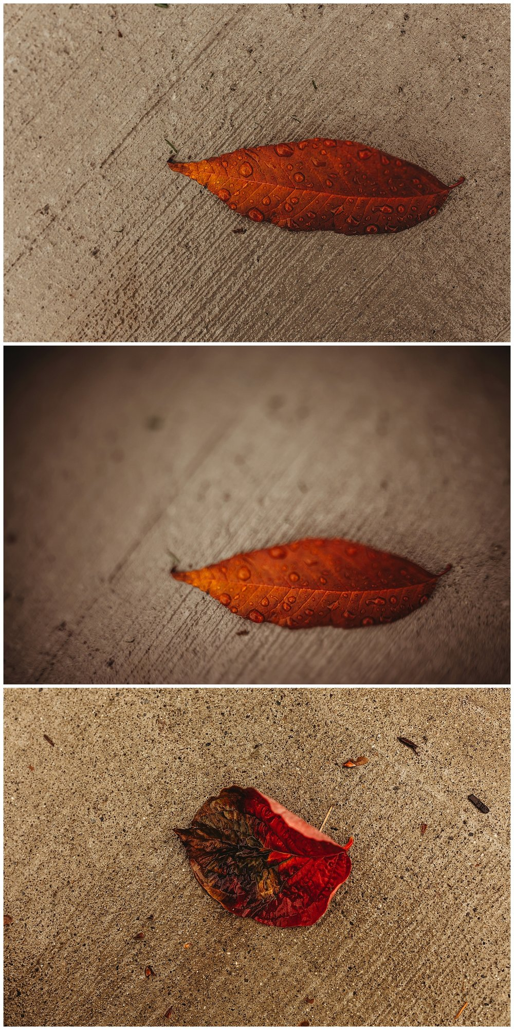 Fall Leaves Chilliwack_1.jpg