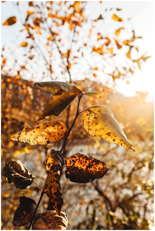 November Chilliwack_4.jpg