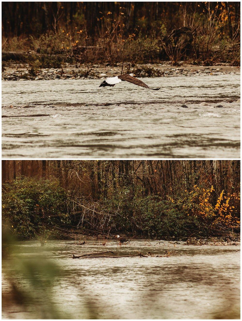 Eagles Vedder River Chilliwack 7.jpg
