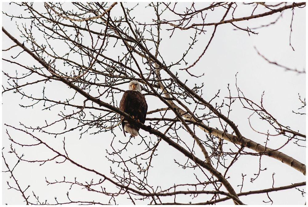 Eagles Vedder River Chilliwack 9.jpg