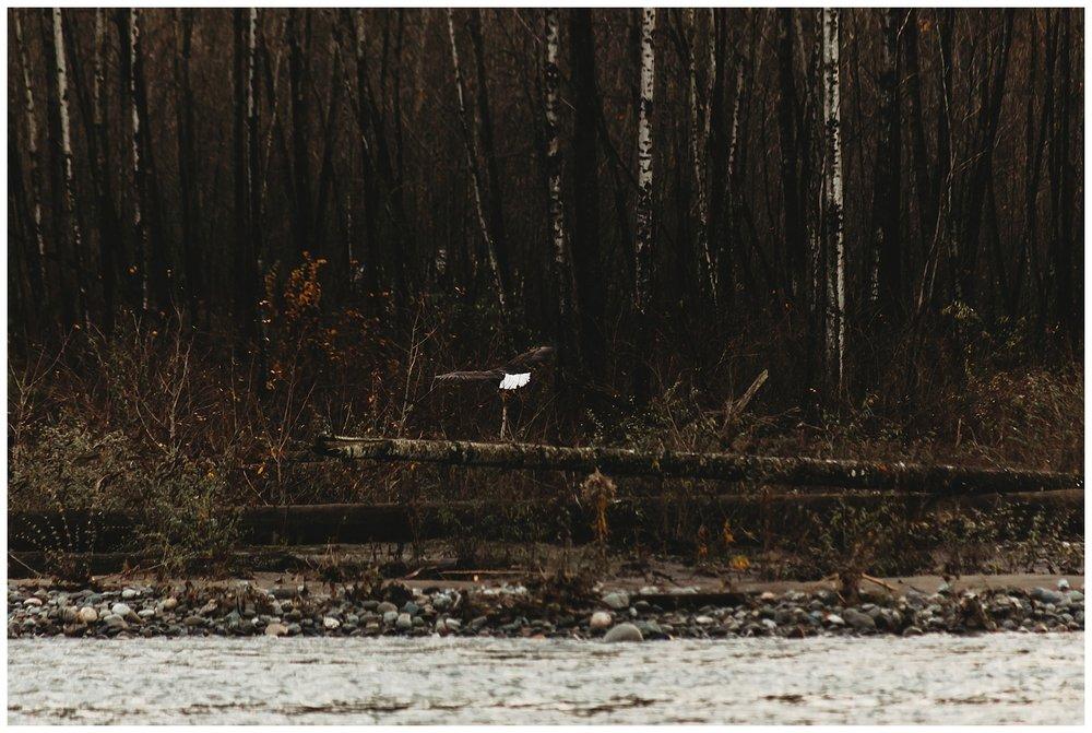 Eagles Vedder River Chilliwack 18.jpg