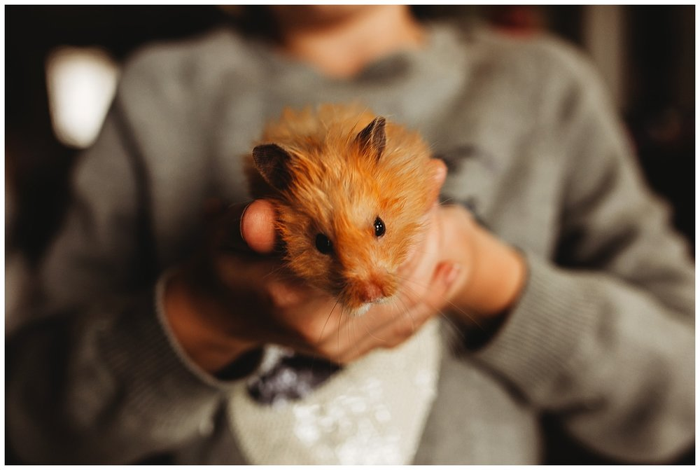 Hamster Chilliwack BC Anna Hurley Photography 4.jpg