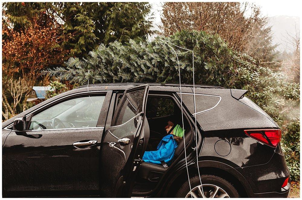 Christmas Trees Chilliwack Anna Hurley Photography 2.jpg
