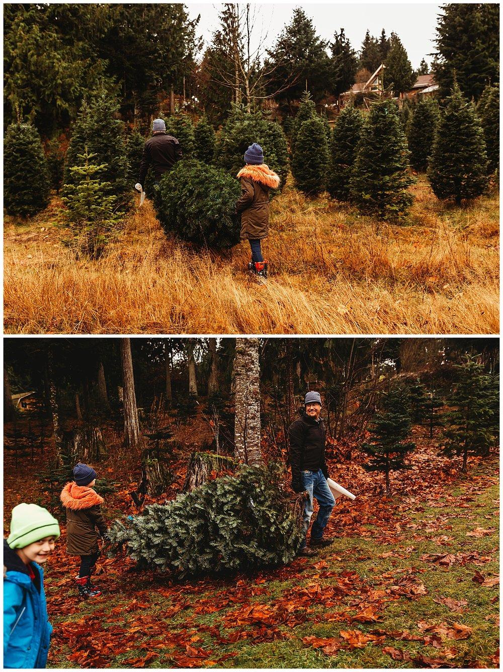 Christmas Trees Chilliwack Anna Hurley Photography 1.jpg