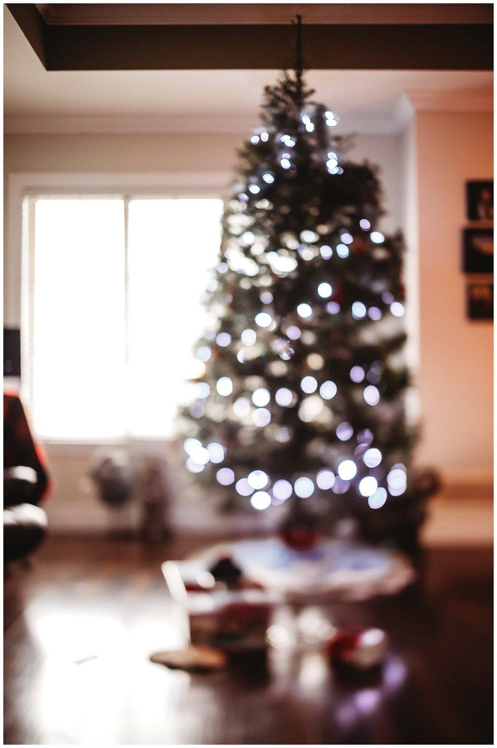 Christmas Trees Chilliwack Anna Hurley Photography 4.jpg