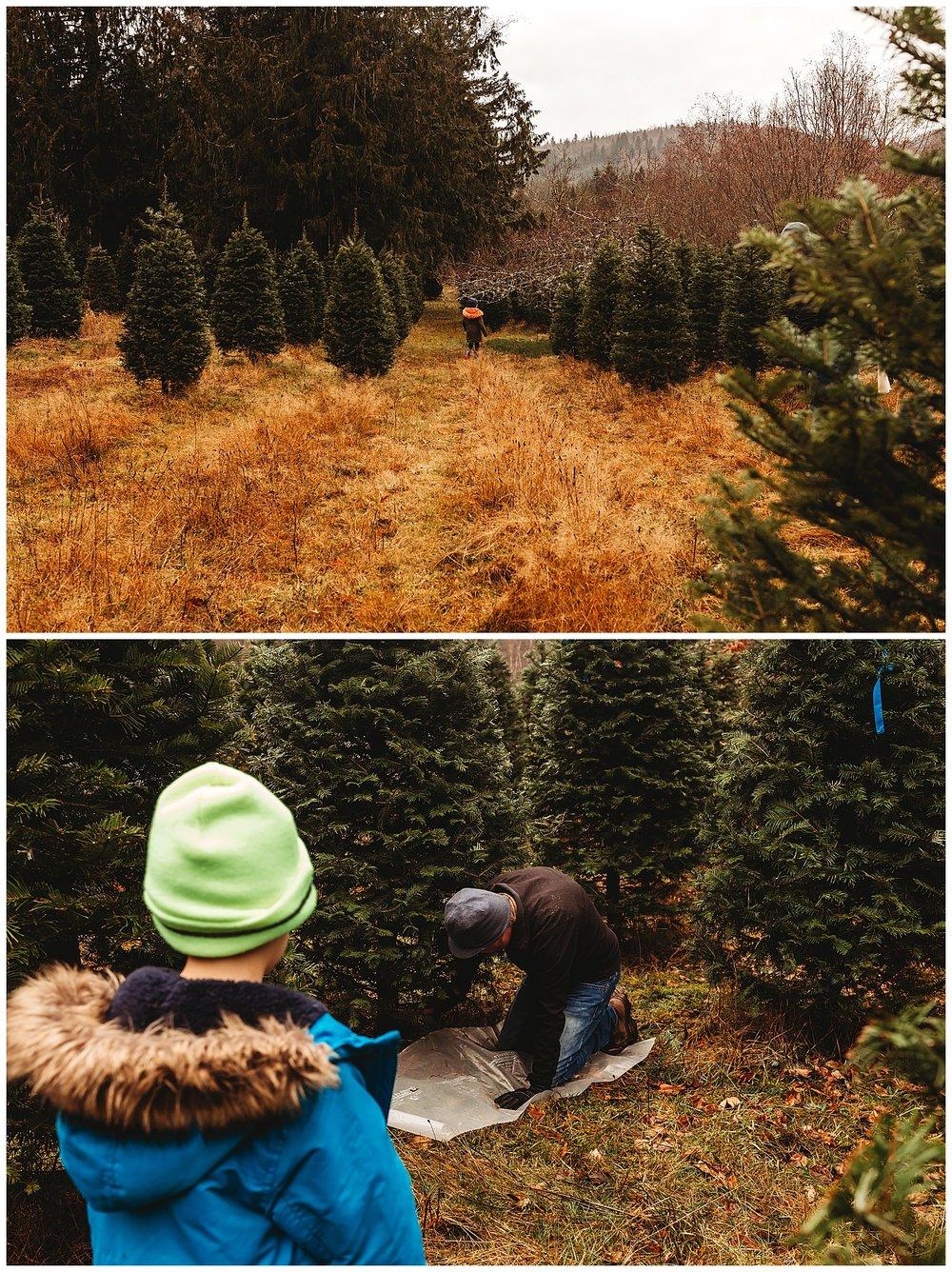 Christmas Trees Chilliwack Anna Hurley Photography.jpg