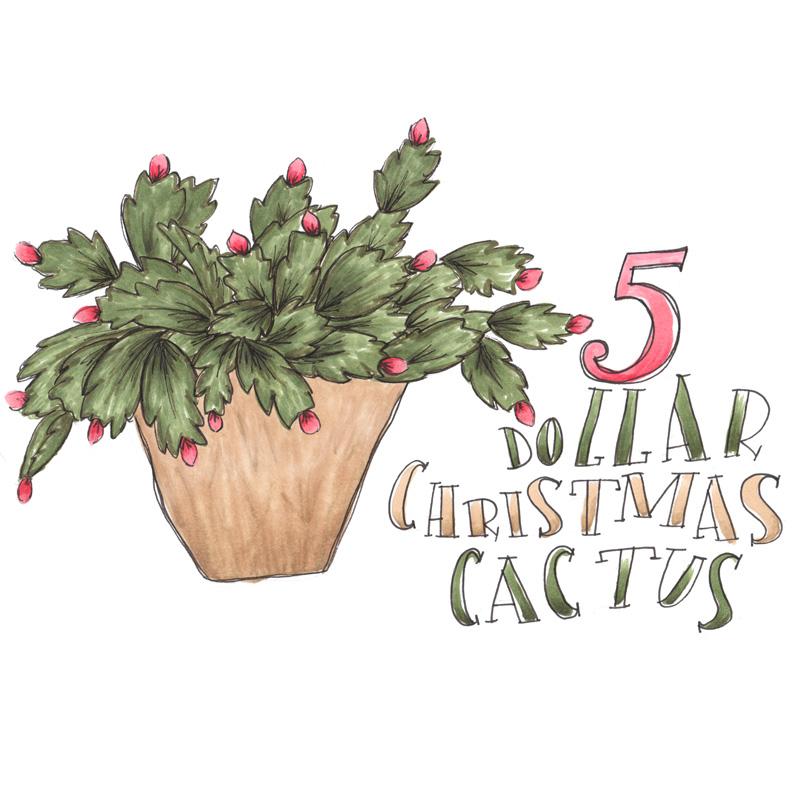 katie vaz - christmas cactus