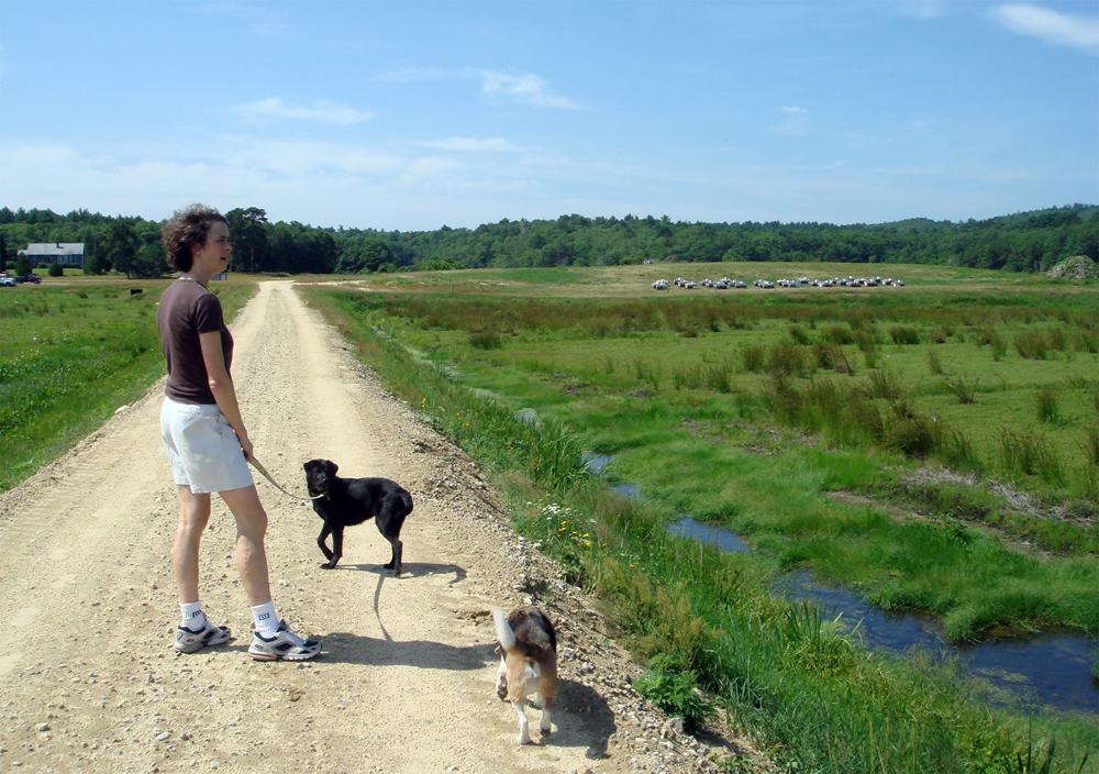 July, 2007 | Caroline Walks the Bogs | The bees are ensconced on the mound between the 14 acre and 35 acre.