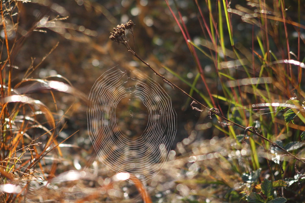 Spider web | Photo by: Cyndi Jackson