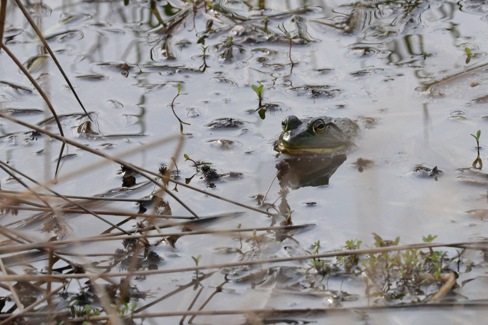 April 28, 2018 | Bullfrog | Photo By: Cyndi Jackson