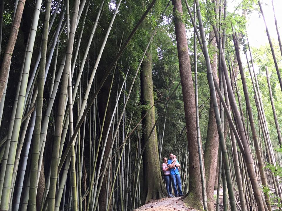 Our Family in the Bamboo Forest