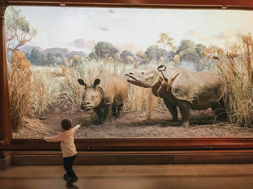 The American Museum of Natural History is a MUST VISIT with children!