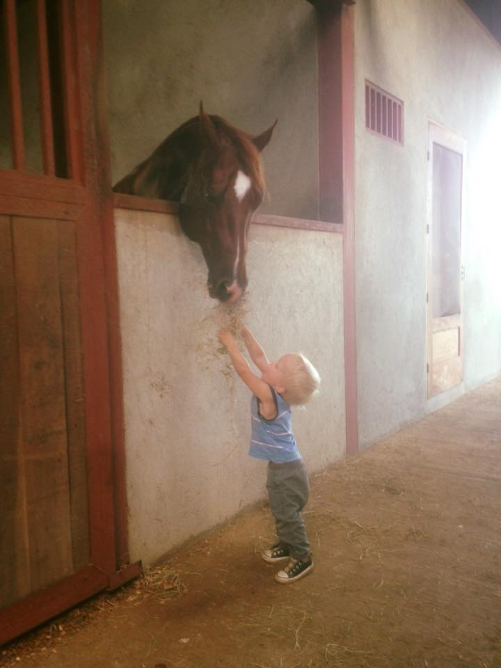 horse and baby.jpg
