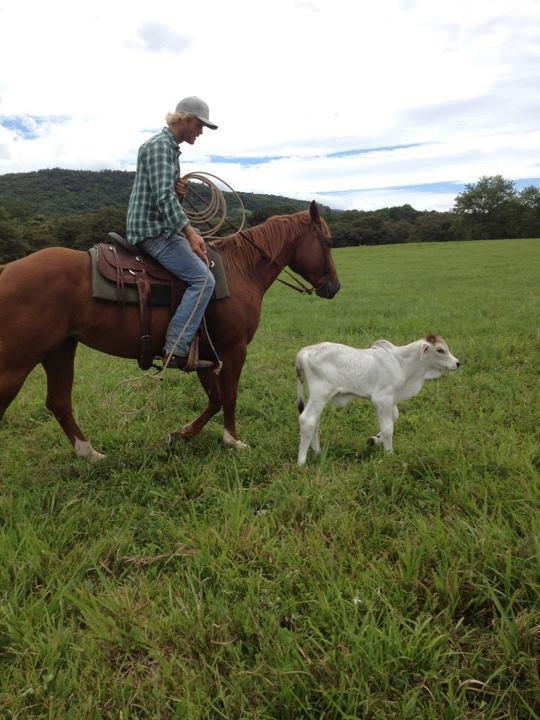 herding on horseback.jpg