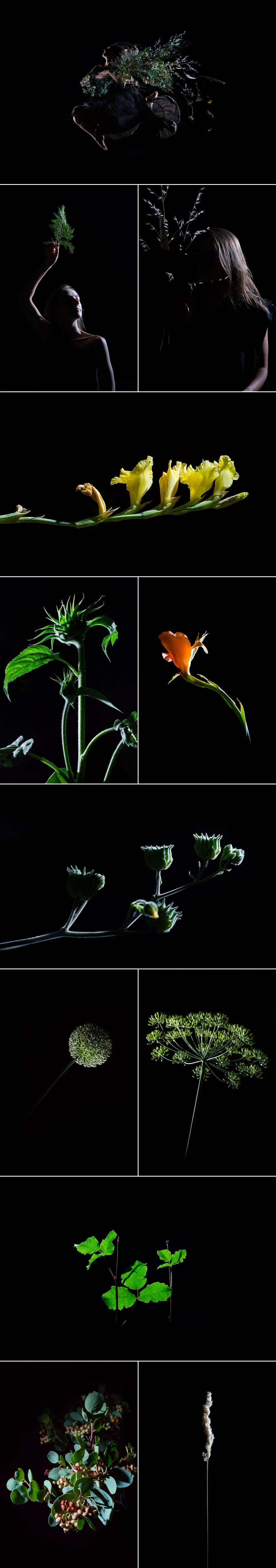 Blog- Ayla Code of the Flowers.jpg