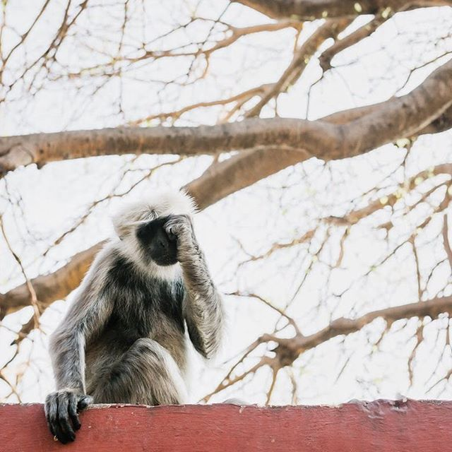 Fell in love with this little sleepy one & her family in #rishikesh .. then they stole my popcorn 😳🍿 • • • • #monkey #sleepymonkey #animalsofindia  #traveldeeper  #letsgosomewhere  #dametraveler #passionpassport #lifeofadventure  #mytinyatlas #ourplanetdaily #travelindia #uttarakhand