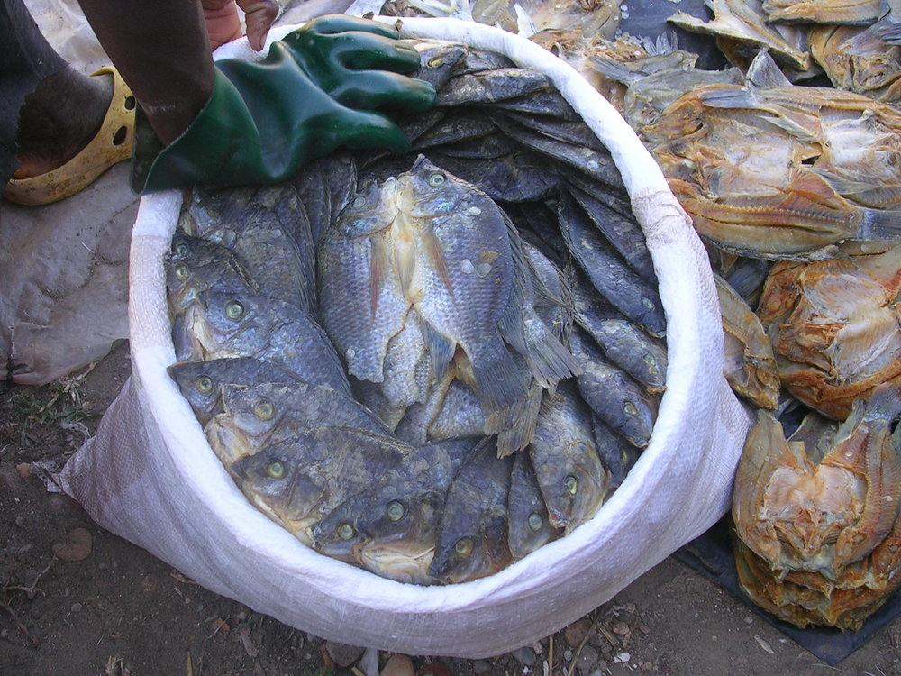 Packed into boxes or bags the fish is sold in Massingir or transported to Maputo where it is highly appreciated.