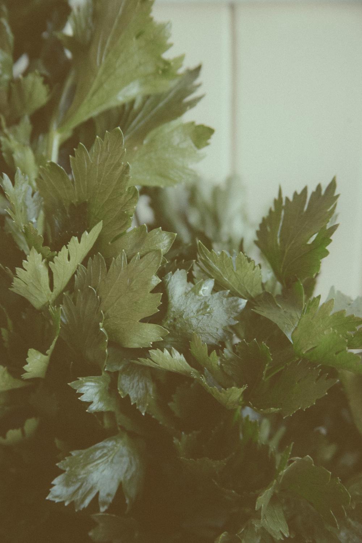 Celery copy.JPG