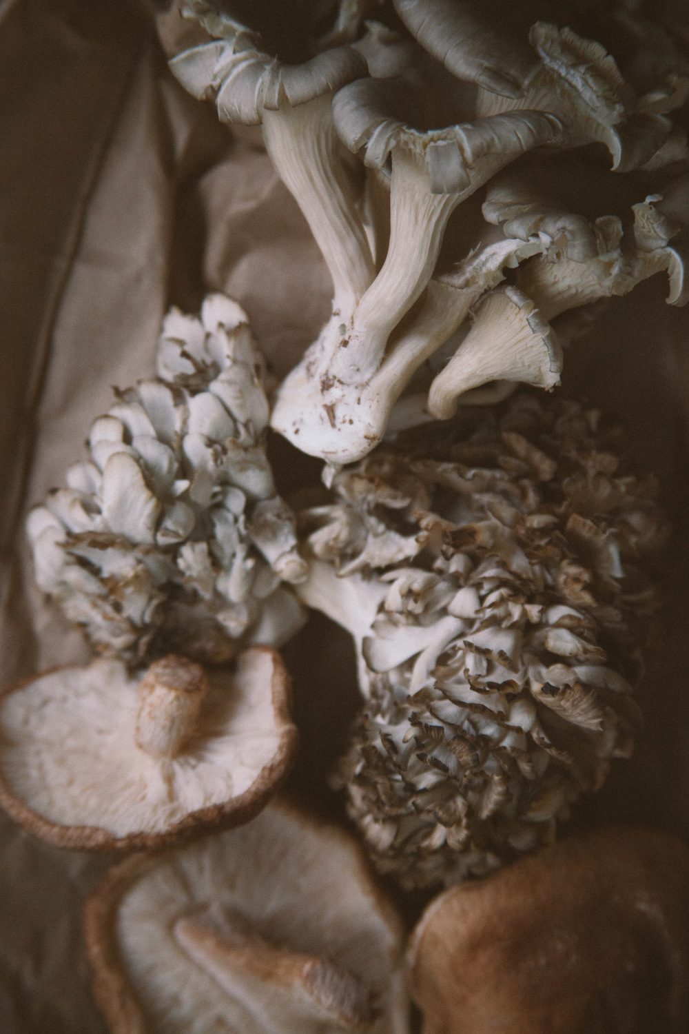 Maitake and shitake mushrooms copy.JPG