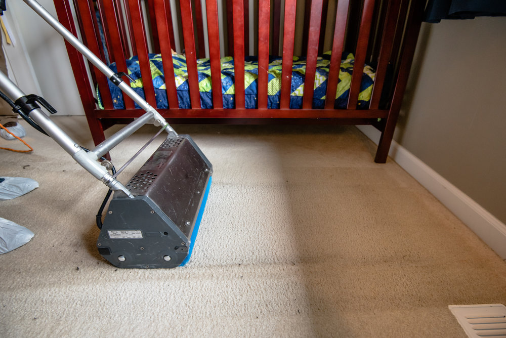 Best carpet cleaning in Shoreline