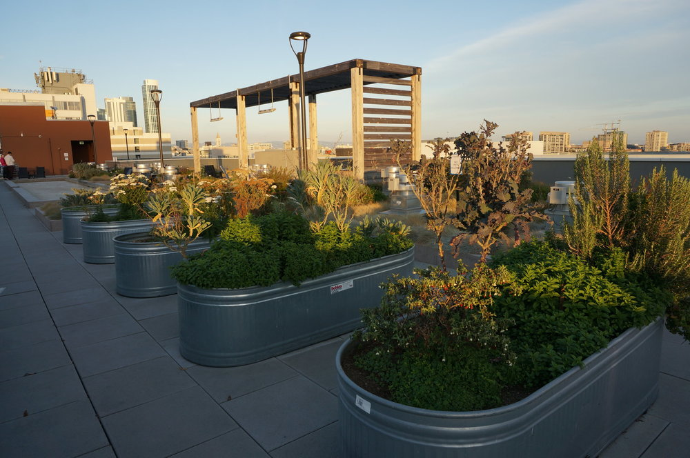 Growing your own food on a city residential roof in  San Fransisco .