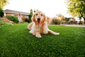 #dog-synthetic-grass#green-look