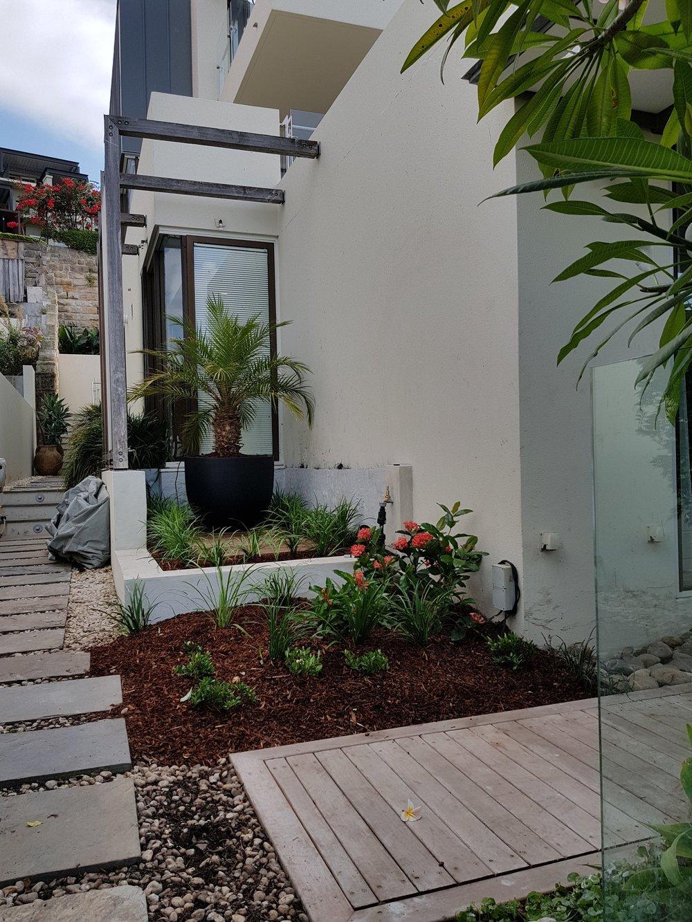 Landscape courtyard Lavender Bay
