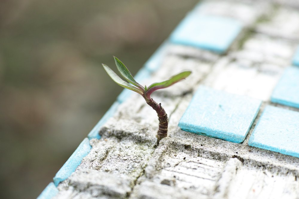 Photo Credit:  www.pexels.com per Engin Akyurt