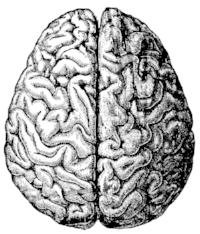 FabNFree-Free-Vintage-Brain-Graphic.jpg