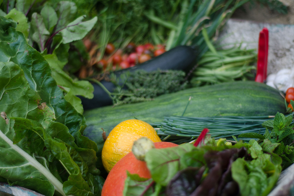 Wheelbarrow-veg-close-up.jpg