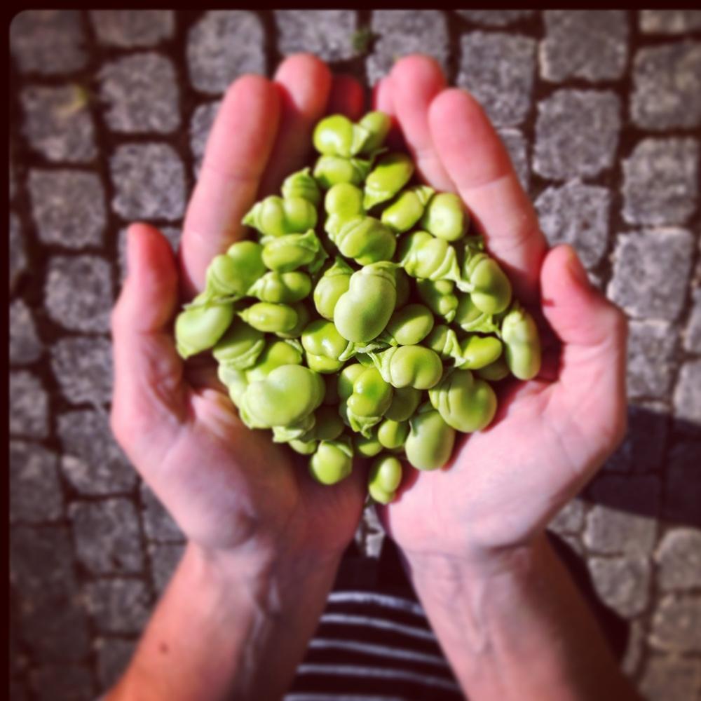 beans square.jpg