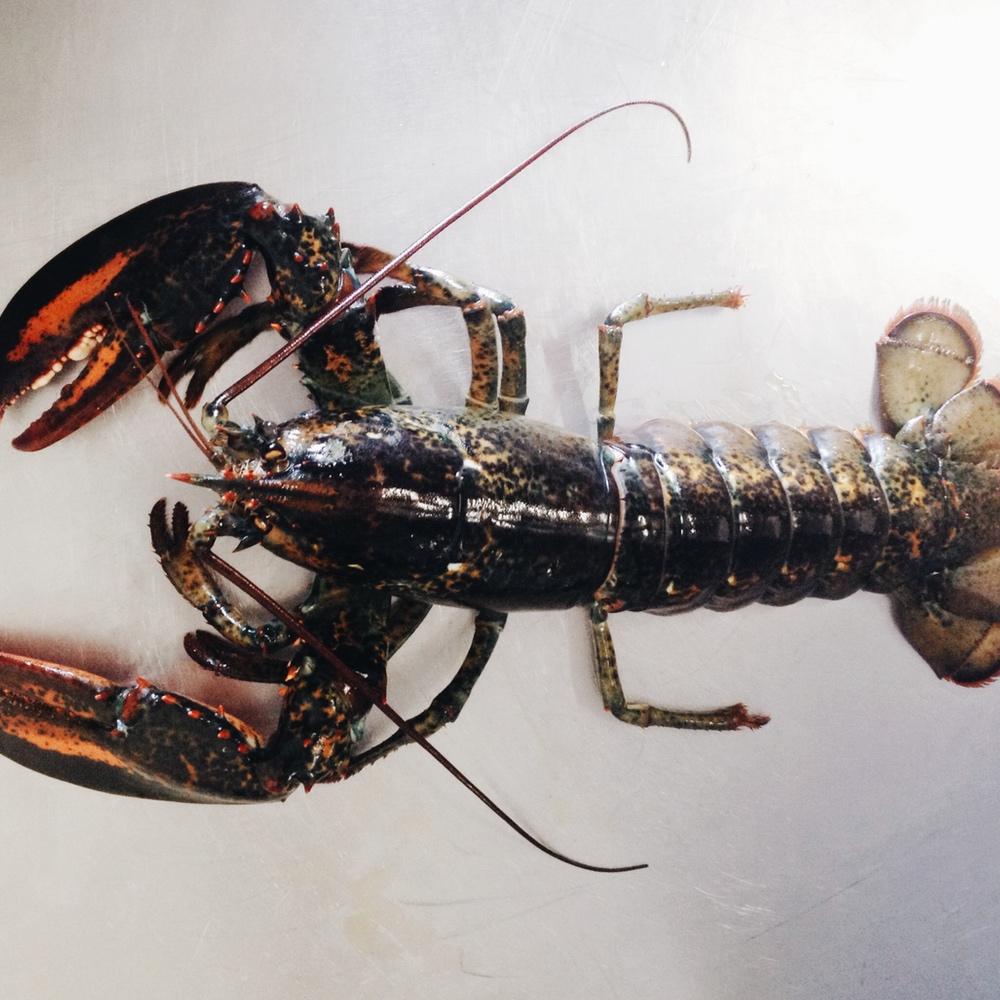 Lobster square.jpg