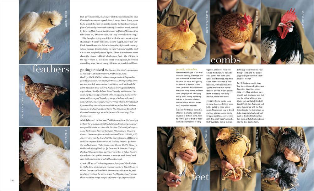 2004_04_RareFowl3 copy.jpg