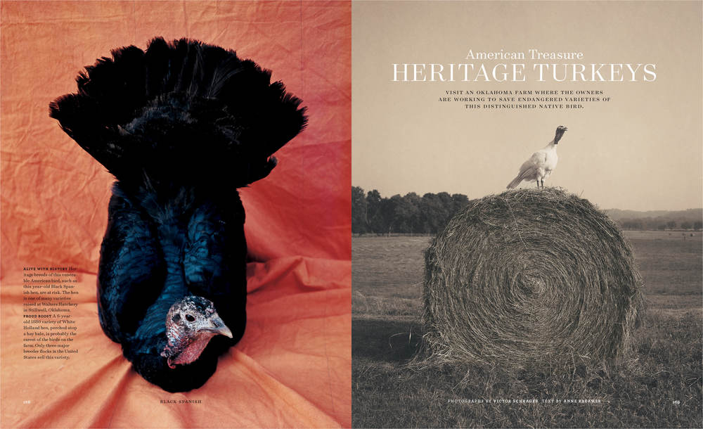 heritage turkeys copy.jpg