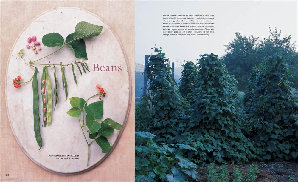 2000_06_Beans copy.jpg