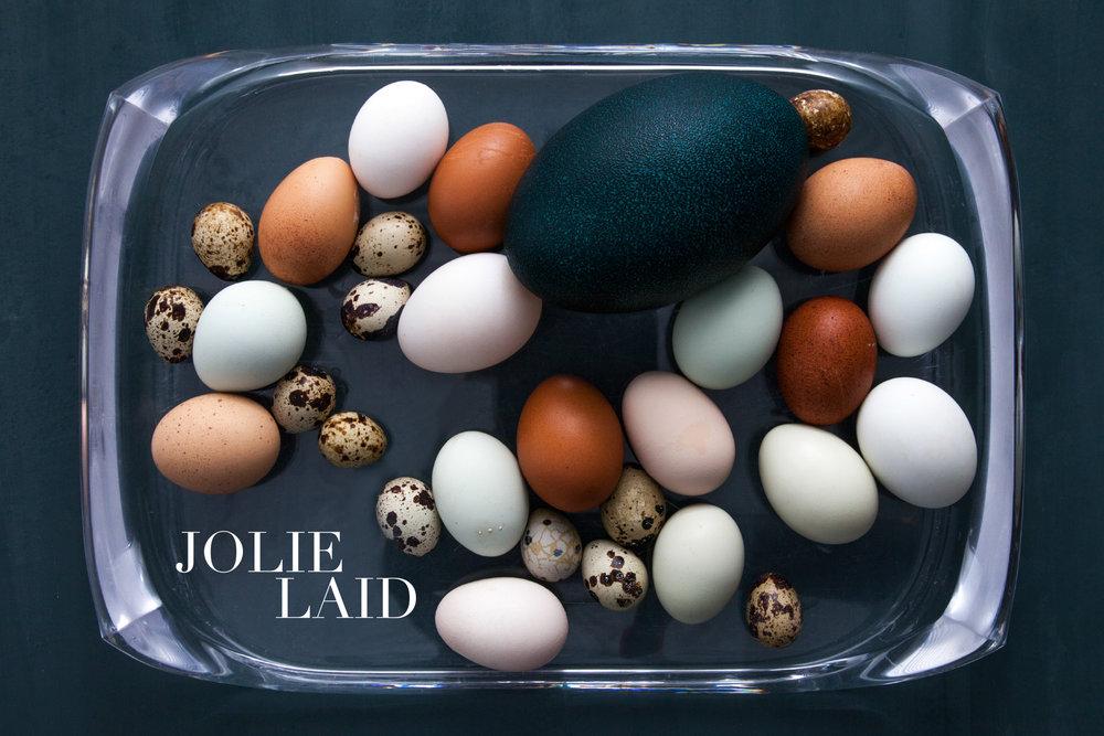 1_EggWhole.jpg