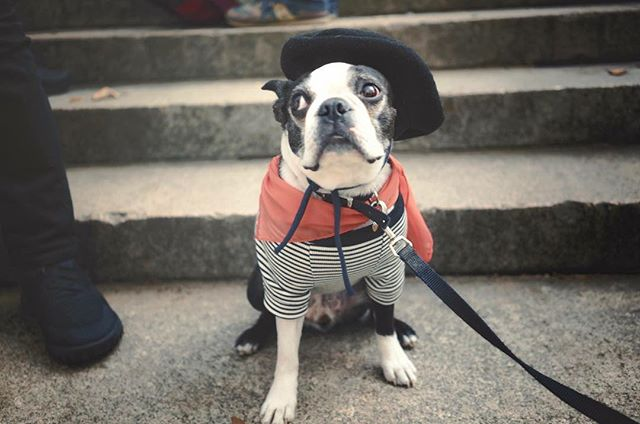 The frenchy me getting to her first Halloween doggies costume contest in the US #littlemisssunshine #halloweeninbrooklyn #frenchy #whattheheck #halloween2017 #brooklynnyc #what_i_saw_in_nyc #newyorkexplored #streetmagazine #newyorker #ilovemyjob #newyorkphotographer #doggies #theimaged #urbanromantix #portraitmood #city_of_newyork #earthofficial