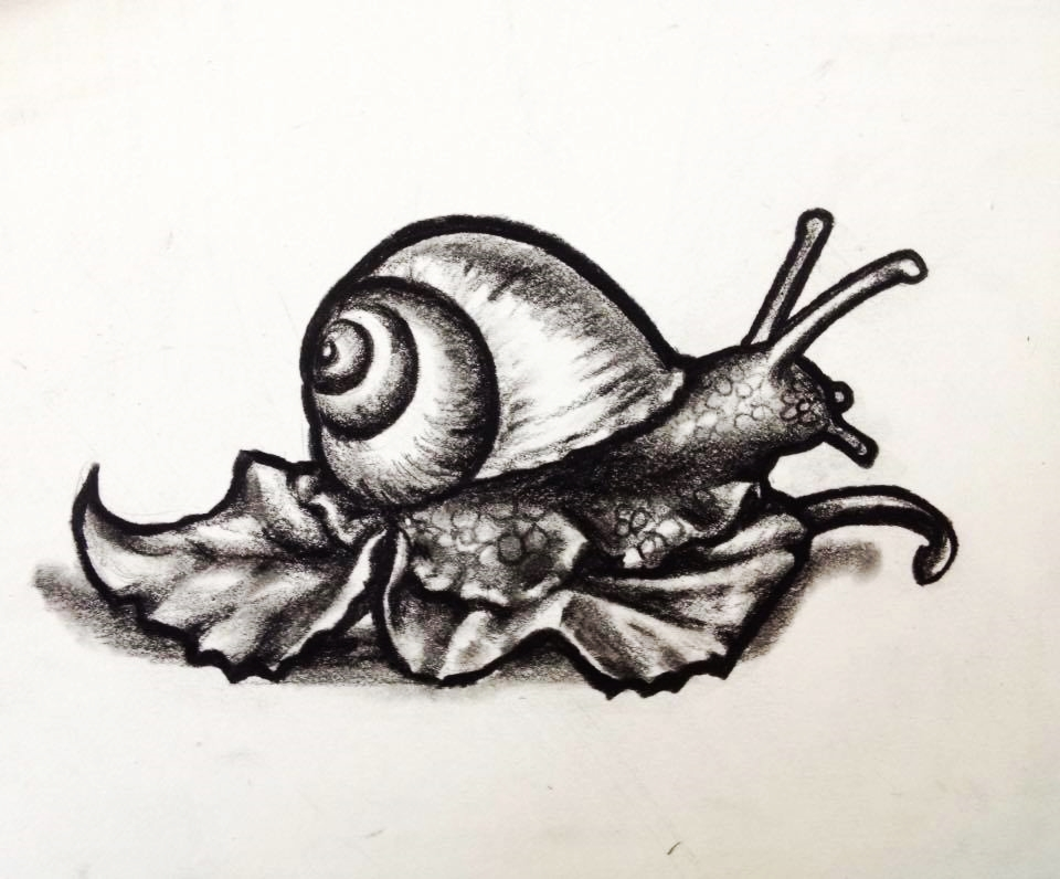 Drawing - Snail.jpg