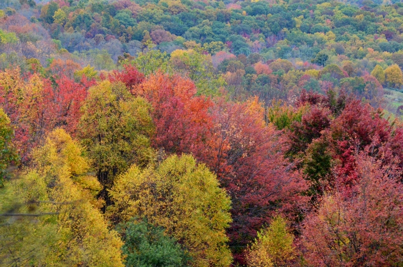 Fall in West Virginia (Photo by  LarryDavisPhotography.com )