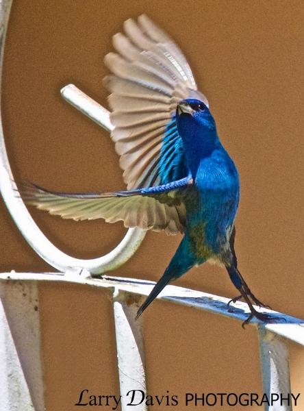 Photo by  LarryDavisPhotography.com