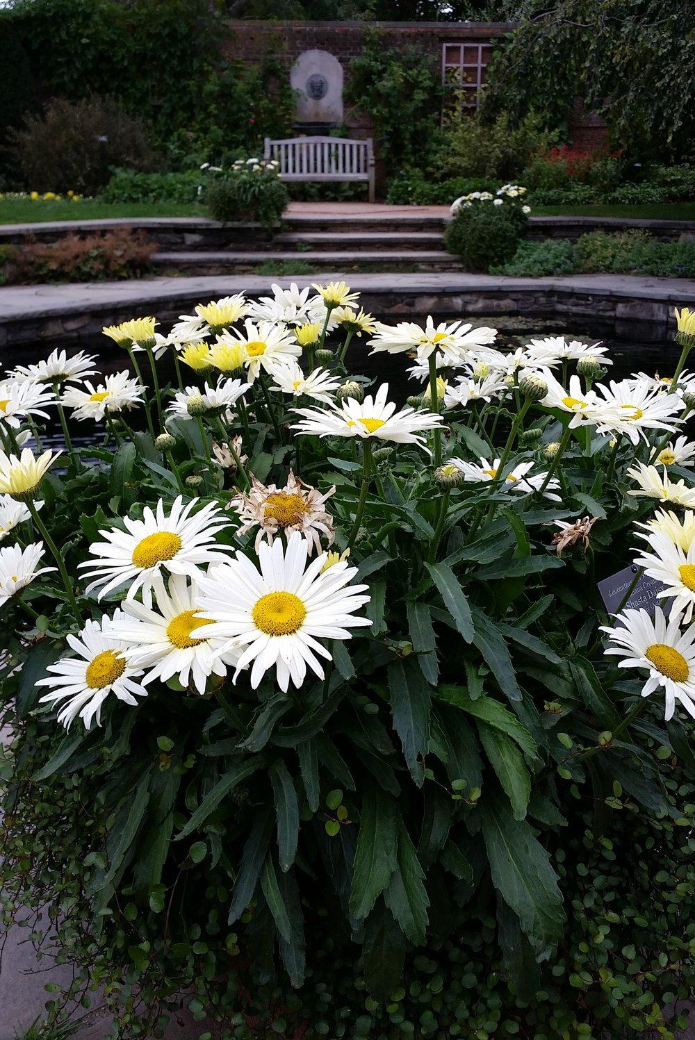 Chicago Botanic Garden; Photo by Laura Wasson Warfel