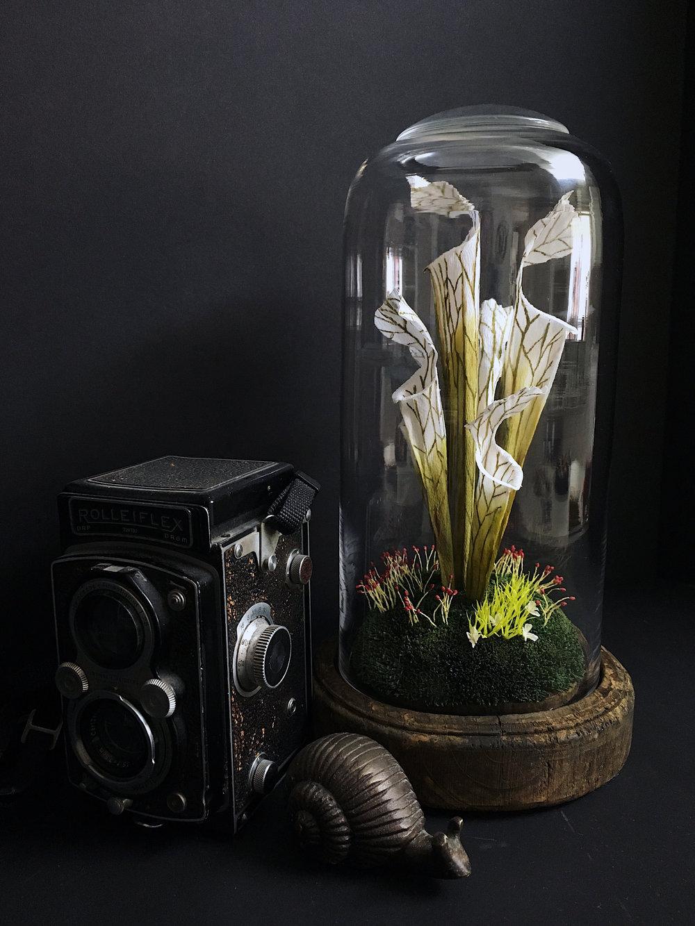 Stephanie Redlinger - PItcher Plants.jpg